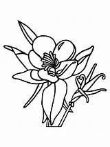 Coloring Columbine Flowers Flower Printable Recommended Mycoloring sketch template