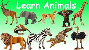 Images Of Wild Animals For Kids | www.pixshark.com ...