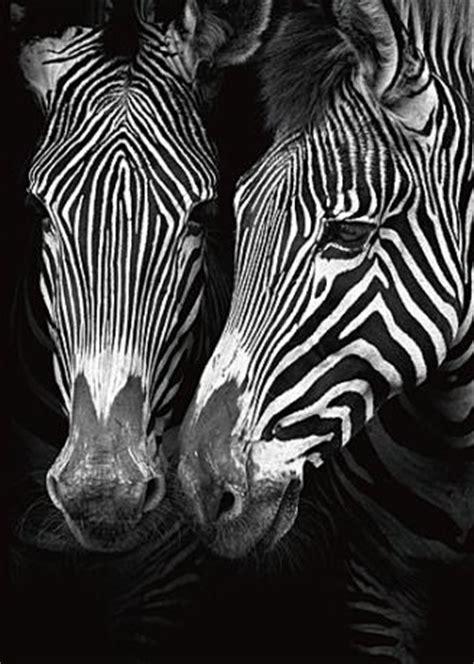 Tierbilder Schwarz Weiß by Digitale Kunstdrucke Kunstdrucke Poster