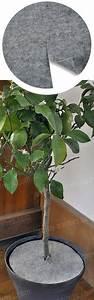 Plante D Extérieur En Pot : feutre decorpot 30cm pour plantes en pot terreau et paillage ~ Teatrodelosmanantiales.com Idées de Décoration