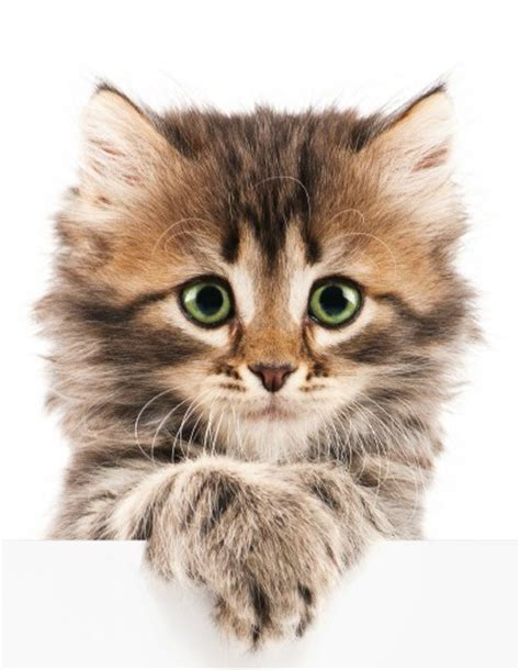 calico names 20 unique calico cat names you ve never seen before