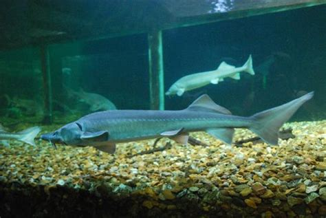aquarium de touraine horaires treffpunkt picture of grand aquarium de touraine lussault sur loire tripadvisor
