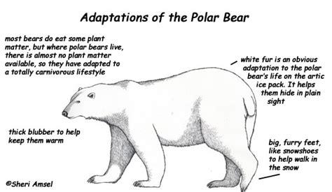 picture citations polar bears
