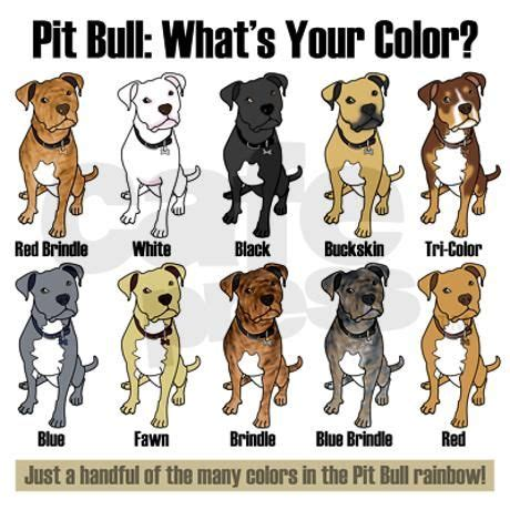 pitbull coat colors pit bull what s your color keepsake on