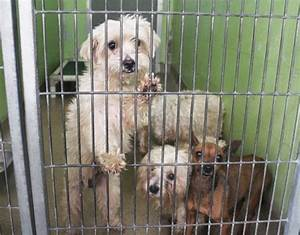 A local woman dropped off 27 dogs at Orange County Animal ...