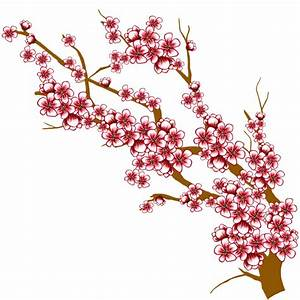 Cherry Blossom Flower Branch Drawing Hand Drawn Cherry ...
