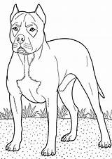 Boxer Coloring Dog Colouring Backyard Guarding Boxers Guard Breed Dogs Sheets Tocolor Police Trending Days Copy Button Using Template sketch template
