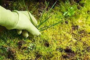Comment Enlever Les Mauvaises Herbes : comment freiner et emp cher les mauvaises herbes de pousser ~ Melissatoandfro.com Idées de Décoration