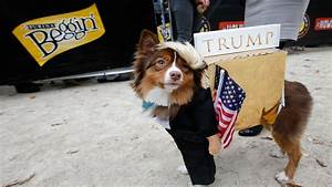 whats cuter than dogs in costume today 6f5fd5ec