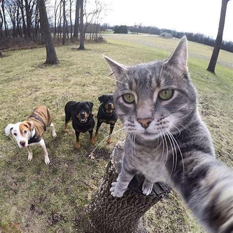 katzen selfies netzteil jetztde