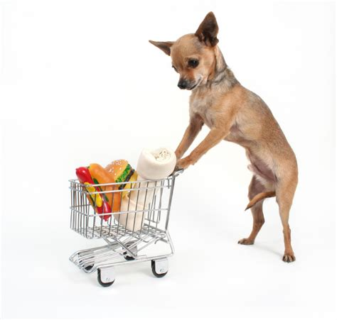 pet food delivery paws pantry