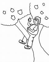 Tree Coloring Boy Climbing Apple Eating Kidsplaycolor Pages 54kb 759px Eat sketch template