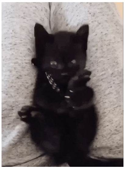 Kitten Feet He Reddit Discovering