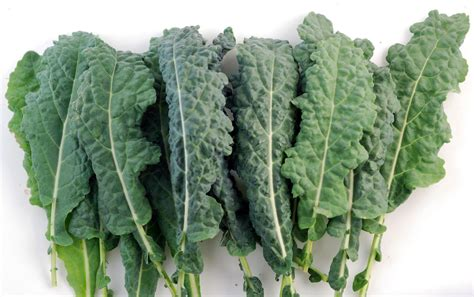 kale benefits cabbage plant vegetables vegetable greens protein garden sprout leafy they spinach looking grow col living coconut turnip