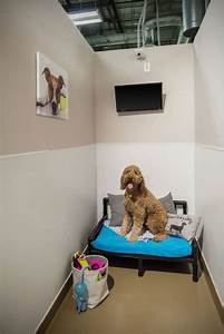 Dog boarding henderson nv henderson pet resort for Red dog daycare