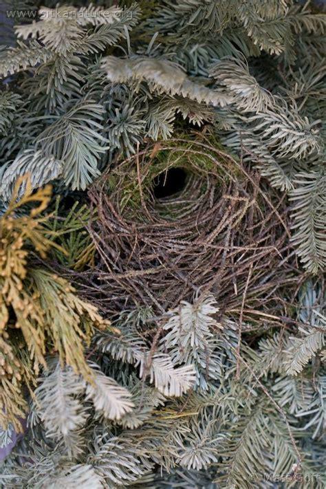 winter wren nest sitka nature