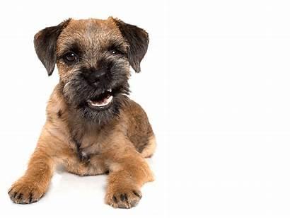 Dog Growling Dogs Test Whisperer Playbuzz Take