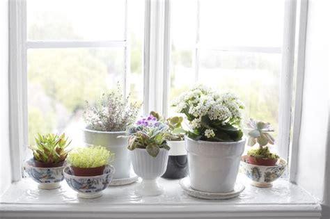 7 Plant Décor Ideas In Scandinavian Interior