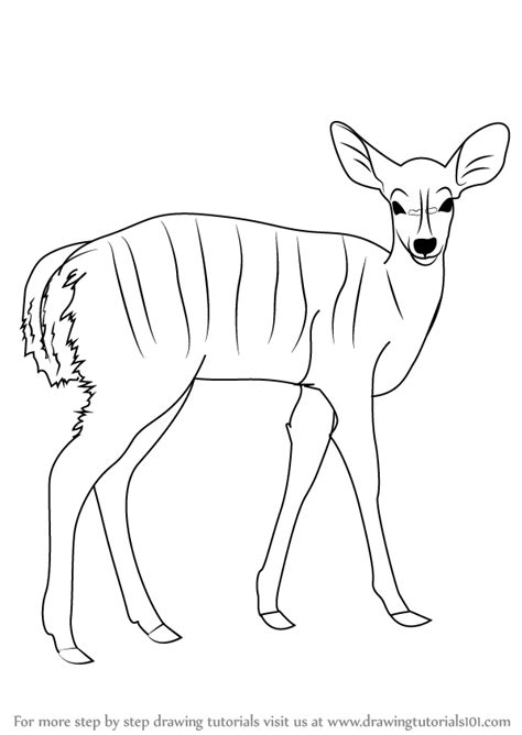 learn   draw  nyala wild animals step  step drawing tutorials