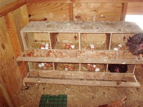 chicken coop many feet square chickens