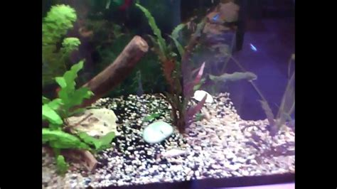 aquarium juwel lido 120 litres