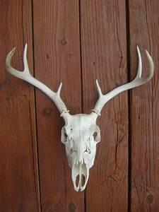 Best images about deer skull decor on