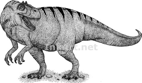 allosaurus stock art illustration