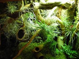Planted Green Anole terarrium. - Reptile Forums