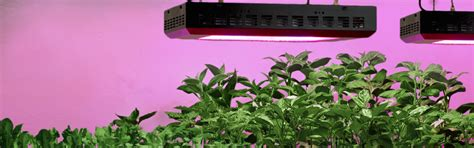 plant growth light grow lights and plant lights for indoor ls plus