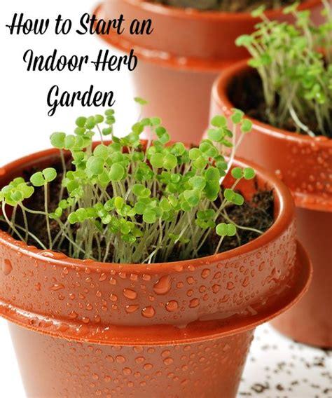 beginners tips to start an indoor herb garden