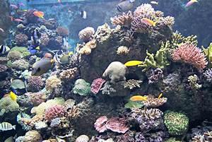 S.E.A. aquarium | Capri By Fraser  Aquatic