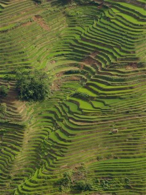 photo gallery wall rice terraces of the ailao mountains honghe prefecture