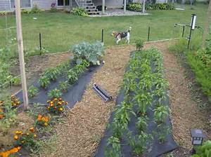 Backyard Vegetable Garden Ideas Landscaping Backyards