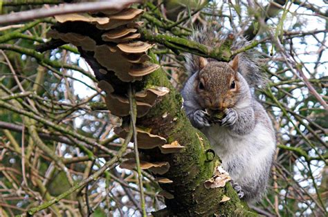 what do squirrels like to eat squirrels feeding anifa