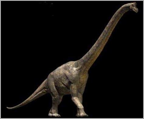 chambre entiere gigadino brachiosaurus
