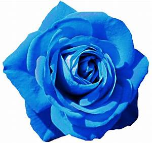 Sky Blue Rose by jeanicebartzen27 on DeviantArt