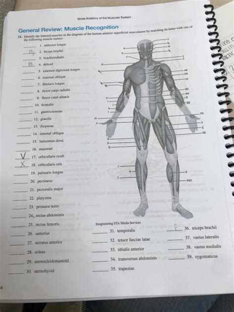 anatomy and physiology archive november 27 2017 chegg
