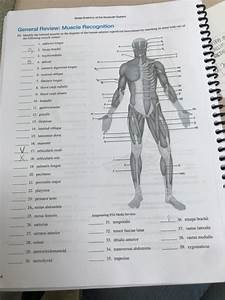 Anatomy And Physiology Archive