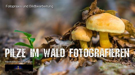 Pilze Im Gartenrasen by Pilze Im Wald Fotografieren