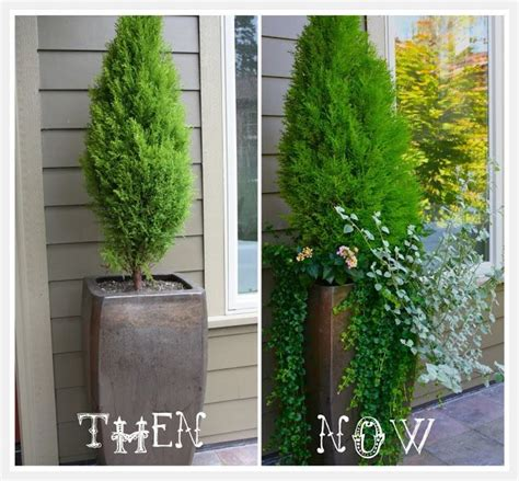 Tall Potted Plants In Front Yard? Never Considered That