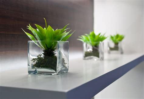 best office desk plants bring the outdoors in decorate with houseplants garden club