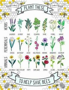 Guide To Bee Friendly Plants