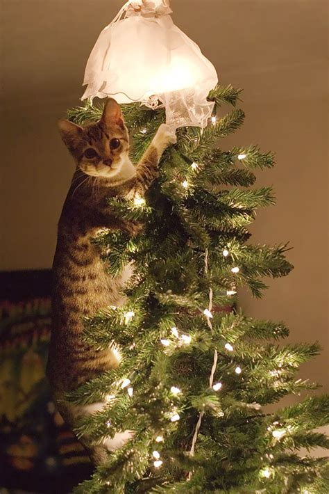 cat first seen christmas tree 122 cats helping decorate trees bored panda