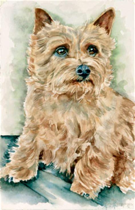 pet portraits  watercolor