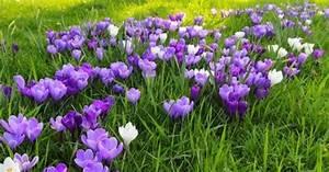 Couvre Sol Vivace : les plantes couvre sol une alternative au gazon ~ Premium-room.com Idées de Décoration
