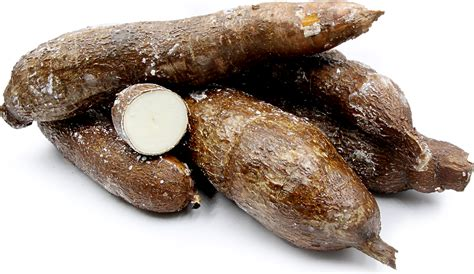 what is cassava yuca root information recipes and facts