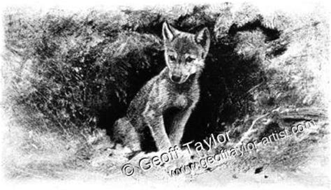 white fang  geoff taylor
