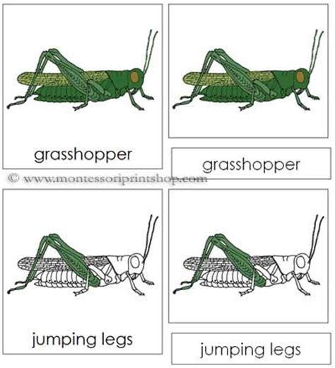 grasshopper nomenclature cards parts   grasshopper cards