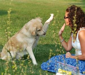 which breeds are the easiest dogs to train With how to properly train a dog