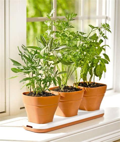 Windowsill Flower Garden by How To Make A Windowsill Herb Garden Grow Culinary Herbs